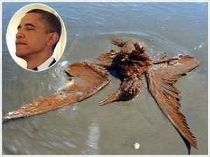 obama dead bird